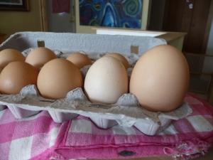 BIrd's Eye Cove Eggs
